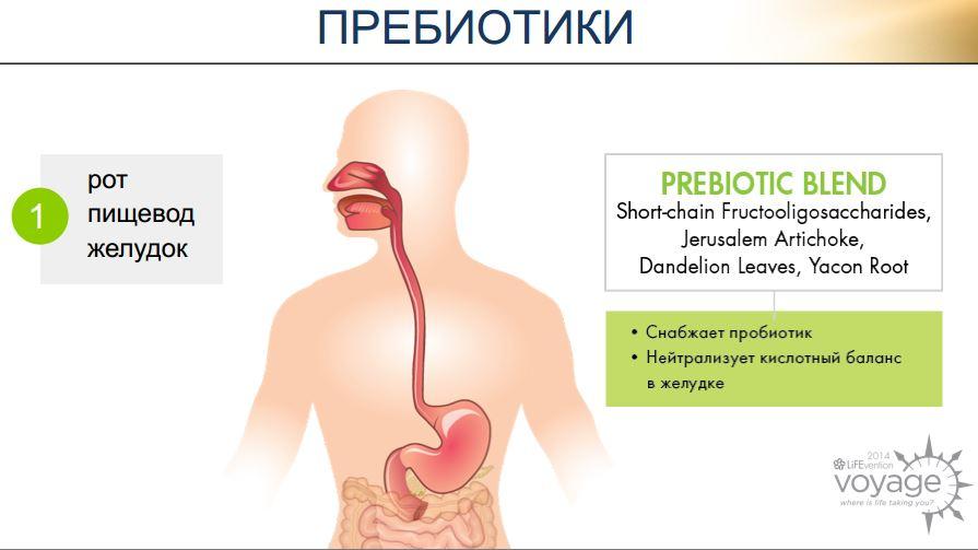 prebiotiki digestive