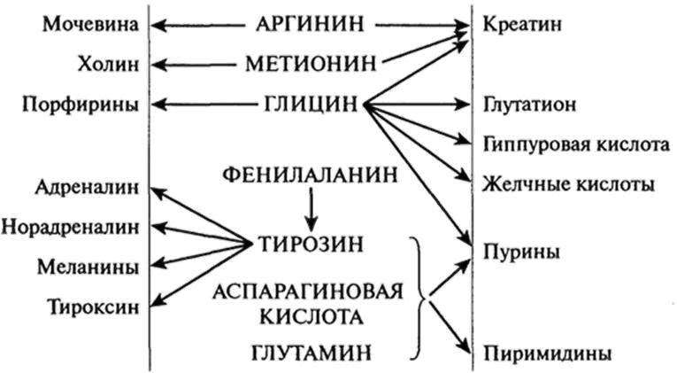 схема функционирования аминокислот