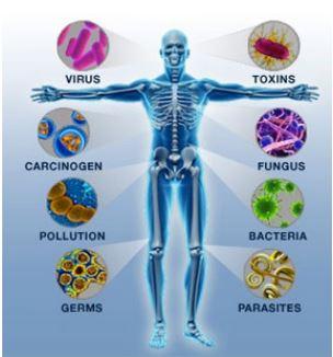 immune protiv mikrobov