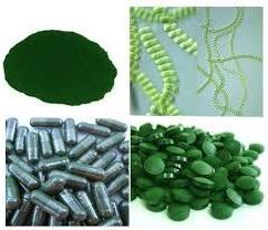 спирулина-порошок-капсулы-таблетки