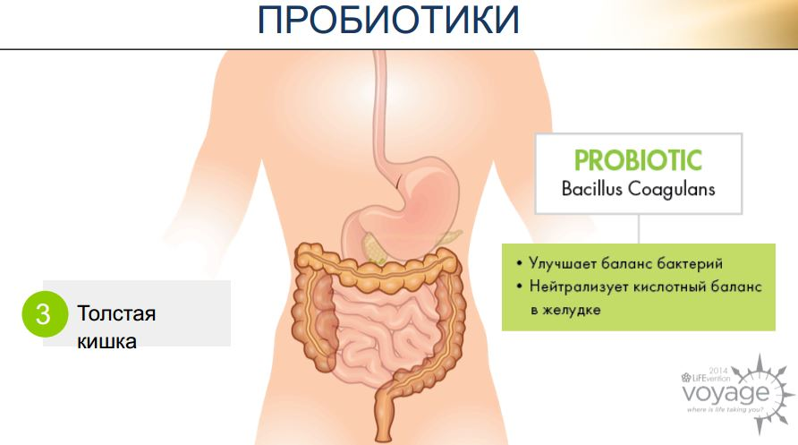 probiotiki lpgn digestive