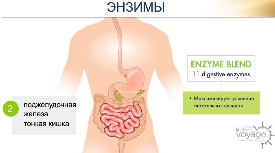 энзимы дайджестив