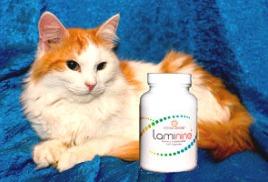 О пользе Ламинина для домашних животных